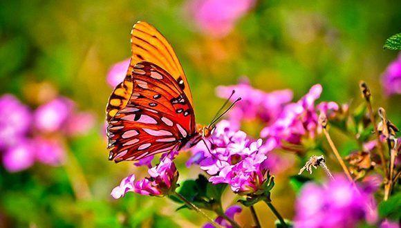 mariposa-580x330